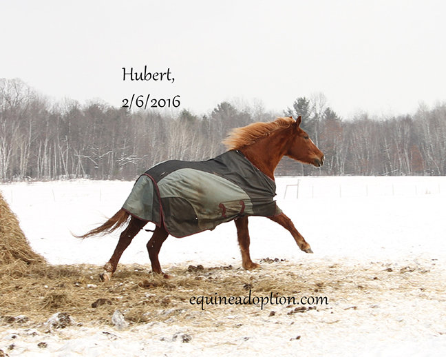 Name: hubert-feb6-IMG_2848-copy.jpg, Views: 1560, Size: 243.39 KB