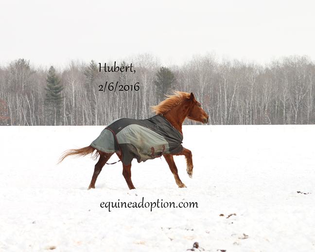 Name: hubert-feb6-IMG_2950-copy.jpg, Views: 1553, Size: 177.51 KB