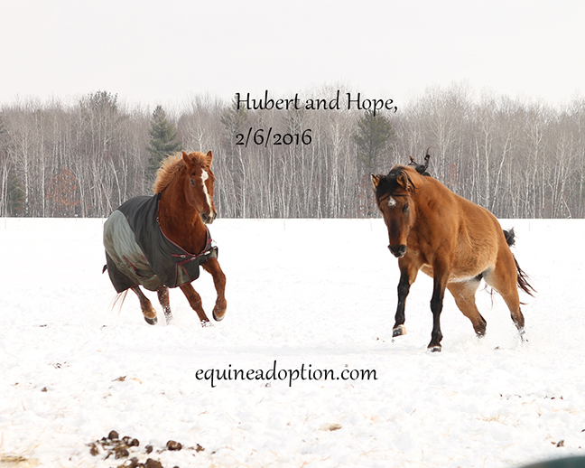 Name: hubert-hope-feb6-IMG_2940-copy.jpg, Views: 1634, Size: 229.63 KB