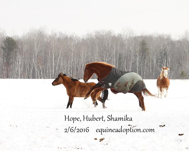 Name: hubert-hope-shamika-feb6-IMG_2929-copy.jpg, Views: 1551, Size: 201.16 KB