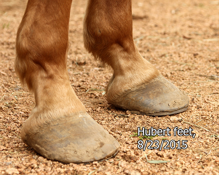 Name: hubert-feet2-august-IMG_3748-copy.jpg, Views: 811, Size: 304.14 KB