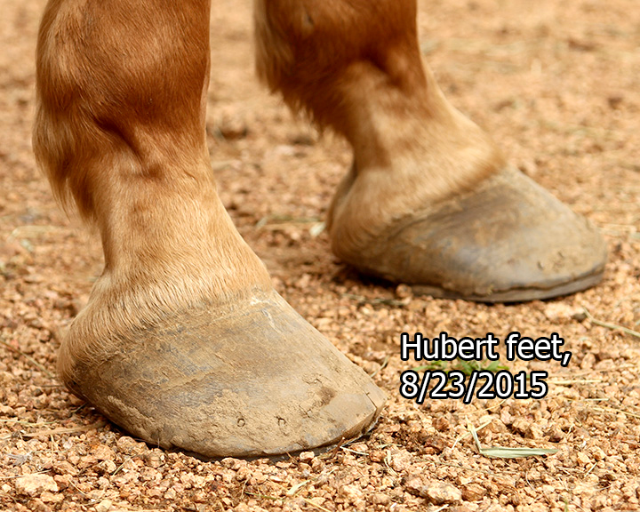 Name: hubert-feet4-august23-IMG_3749-copy.jpg, Views: 810, Size: 331.91 KB
