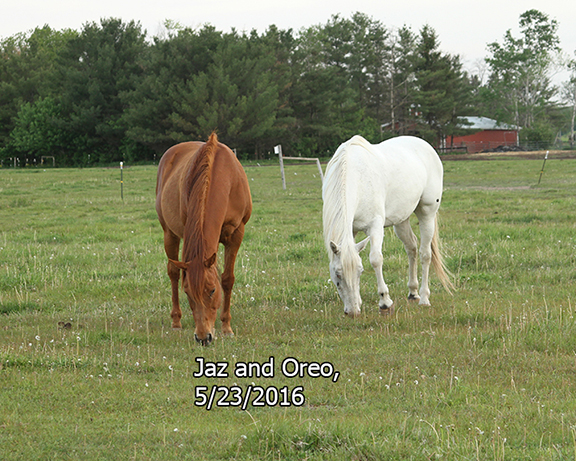 Name: oreo-jaz-may23-IMG_8272-copy.jpg, Views: 352, Size: 328.35 KB