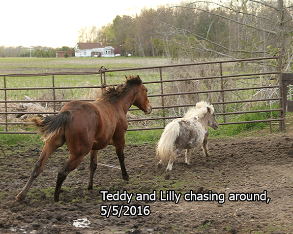 Name: teddy2-chase-lilly-may5-IMG_7697-copy.jpg, Views: 846, Size: 318.92 KB