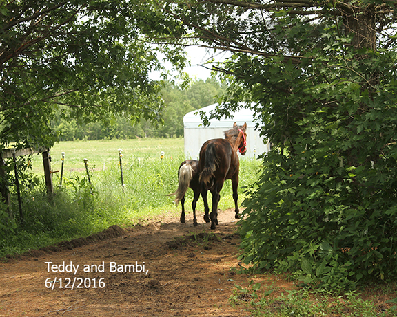Name: teddy2-bambi-going-out-june12-IMG_8703-copy.jpg, Views: 557, Size: 406.92 KB