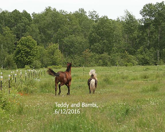 Name: teddy-bambi-butts-june12-IMG_8790-copy.jpg, Views: 562, Size: 338.04 KB