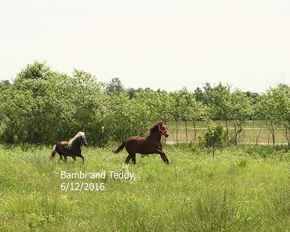 Name: teddy-bambi-run-june12-IMG_8749-copy.jpg, Views: 559, Size: 286.58 KB