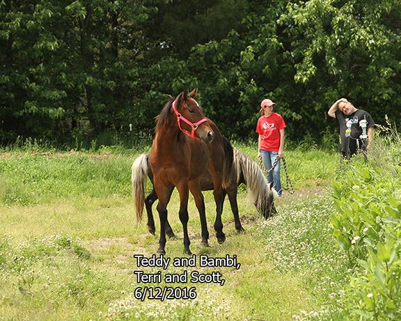 Name: teddy-bambi-terri-scott-june12-IMG_8873-copy.jpg, Views: 554, Size: 386.37 KB
