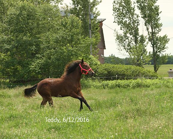 Name: teddy-pasture-june12-IMG_8858-copy.jpg, Views: 556, Size: 372.85 KB