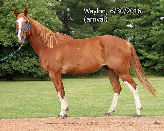 Name: waylon2-june30-IMG_9428-copy.jpg, Views: 1139, Size: 320.92 KB