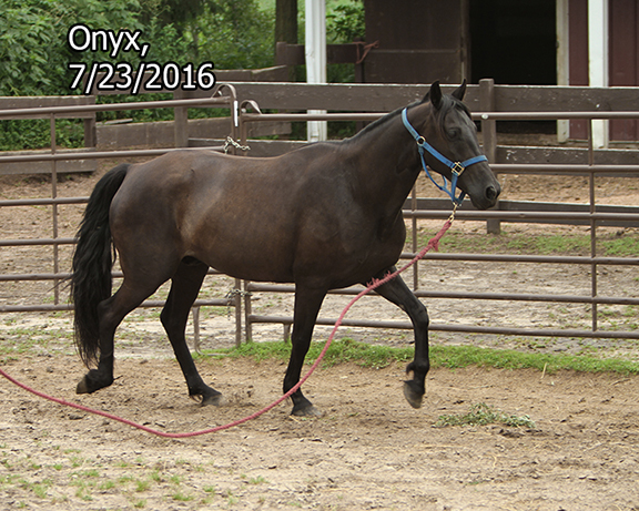 Name: onyx-roundpen-july23-IMG_9719-copy.jpg, Views: 1705, Size: 315.21 KB