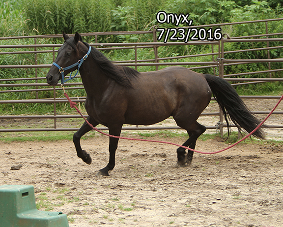 Name: onyx-roundpen-july23-IMG_9726-copy.jpg, Views: 1707, Size: 350.50 KB