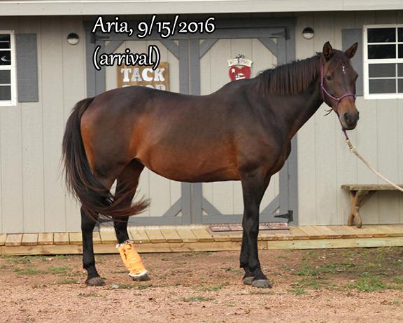 Name: ARIA1-SEPT15-IMG_3017-copy.jpg, Views: 3410, Size: 245.36 KB
