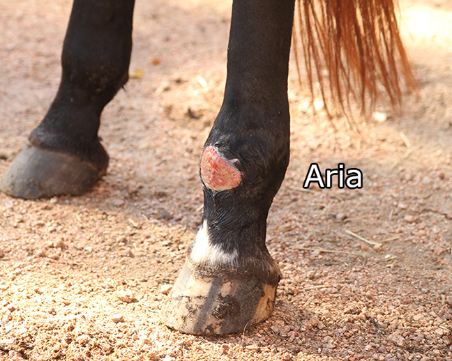Name: ARIA-WOUND-SEPT18-IMG_3050-copy.jpg, Views: 3312, Size: 330.34 KB