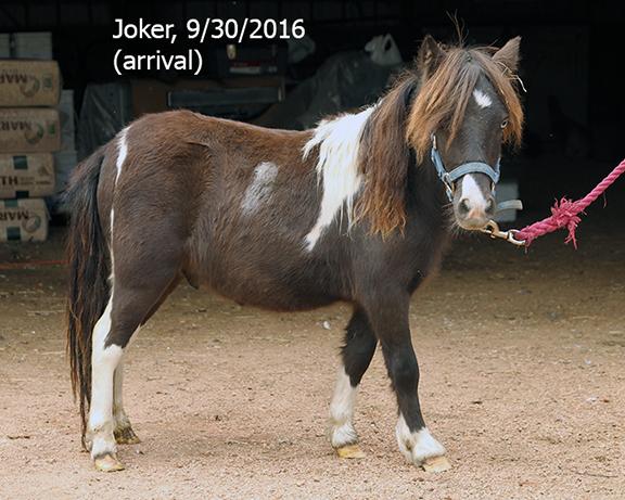 Name: joker1-sept30-IMG_3217-copy.jpg, Views: 1322, Size: 290.95 KB