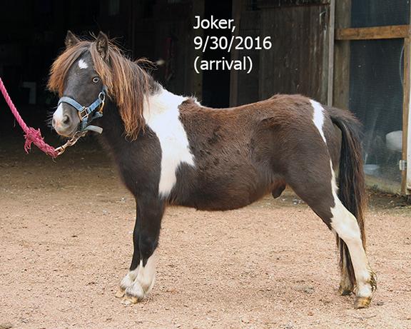 Name: joker2-sept30-IMG_3224-copy.jpg, Views: 1337, Size: 317.82 KB