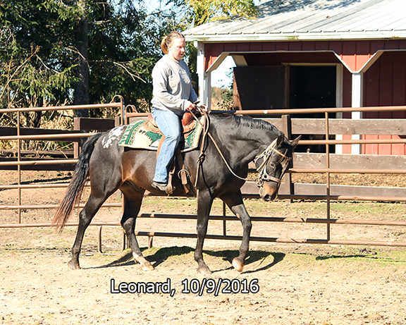 Name: leonard-ride3-oct9-IMG_3799-copy.jpg, Views: 772, Size: 392.65 KB