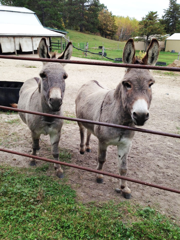 Name: donkeys.jpg, Views: 366, Size: 240.90 KB