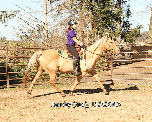Name: jacoby-ride2-trot-nov5-IMG_4746-copy.jpg, Views: 635, Size: 420.04 KB