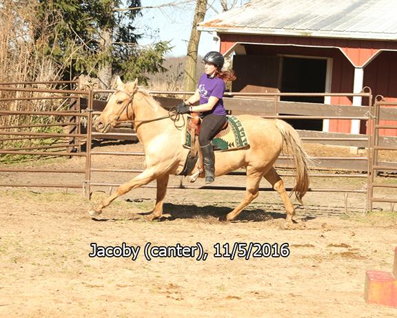 Name: jacoby-ride3-canter-nov5-IMG_4761-copy.jpg, Views: 630, Size: 347.53 KB