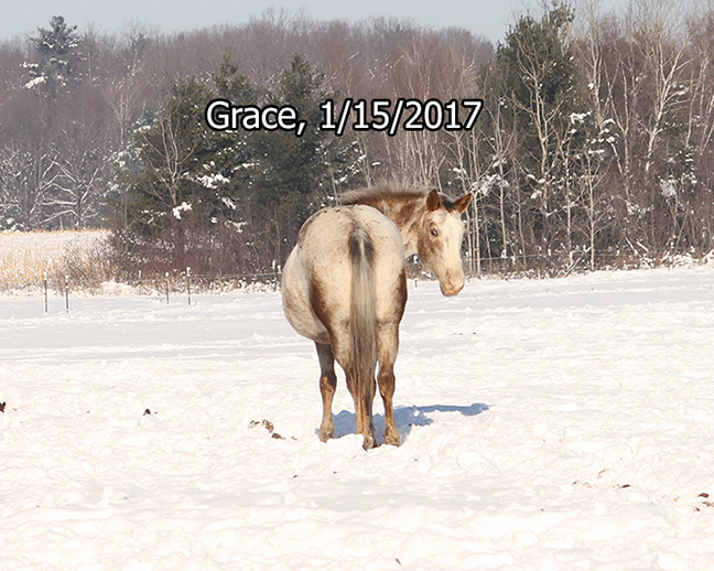 Name: grace-jan15-IMG_5490-copy.jpg, Views: 1860, Size: 313.02 KB