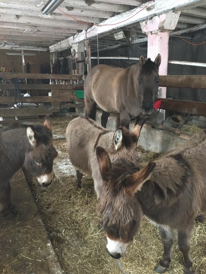Name: herd.jpg, Views: 408, Size: 99.97 KB