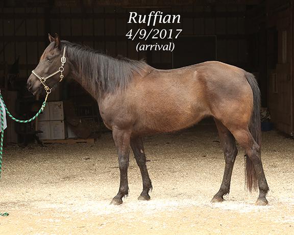 Name: ruffian1-april9-IMGL7480-copy.jpg, Views: 1869, Size: 280.27 KB