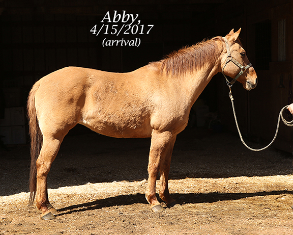 Name: abby1-april15-IMGL7755-copy.jpg, Views: 1348, Size: 282.90 KB