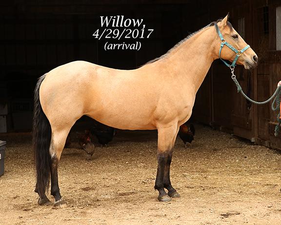 Name: willow1-april29-IMGL8134-copy.jpg, Views: 1449, Size: 270.73 KB