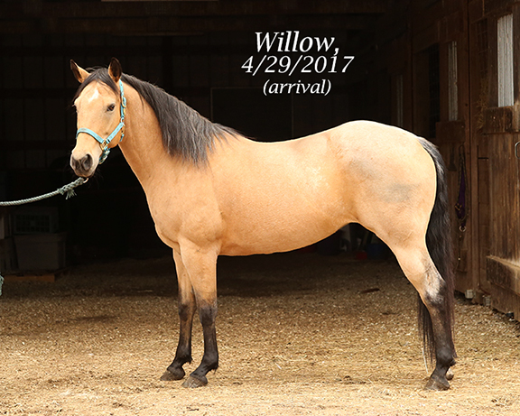 Name: willow2-april29-IMGL8118-copy.jpg, Views: 1363, Size: 260.42 KB