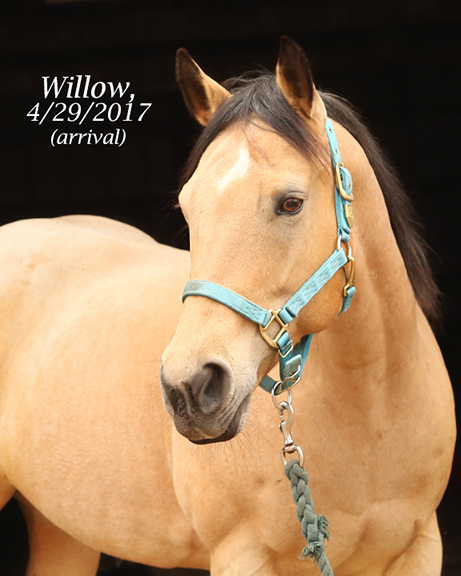 Name: willow3-head-april29-IMGL8150-copy.jpg, Views: 1499, Size: 190.11 KB