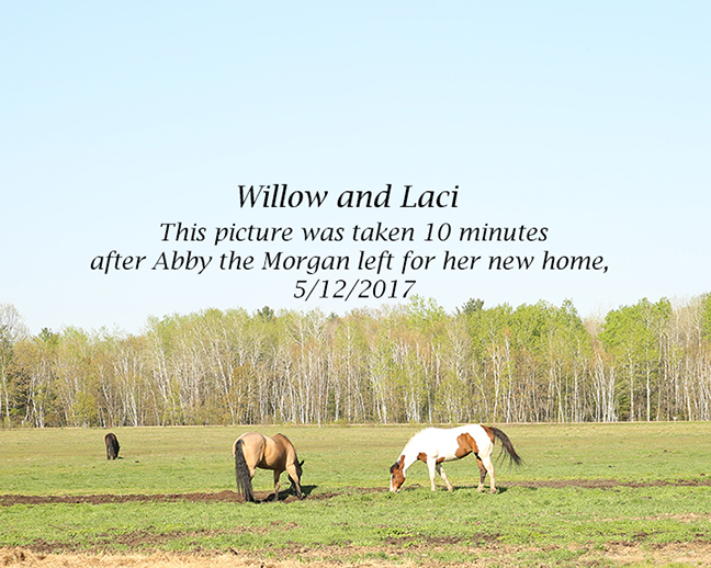 Name: willow-and-laci-may12-IMGL8455-copy.jpg, Views: 935, Size: 296.79 KB