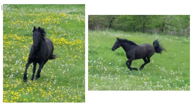 Name: Onyx on pasture grouping.JPG, Views: 860, Size: 47.82 KB