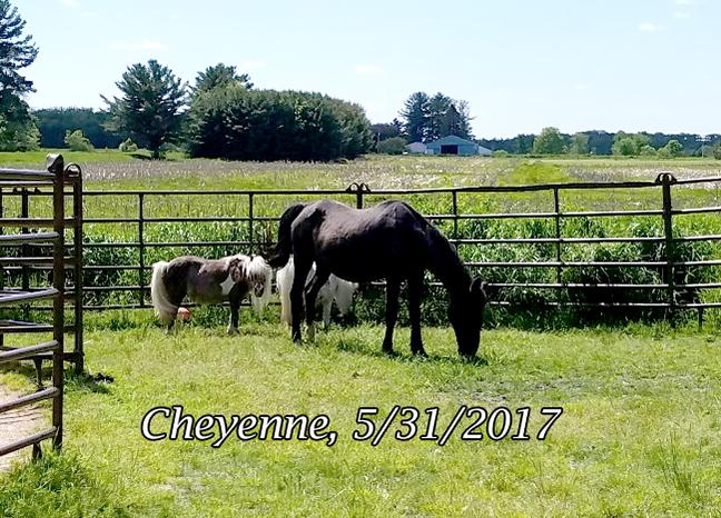Name: CHEYENNE-MAY31-20170531_145638_resized-copy.jpg, Views: 1113, Size: 376.40 KB
