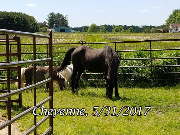Name: CHEYENNE-MAY31-20170531_145710_resized-copy.jpg, Views: 1105, Size: 288.45 KB