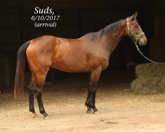 Name: suds1-june11-IMGL9446-copy.jpg, Views: 696, Size: 192.24 KB
