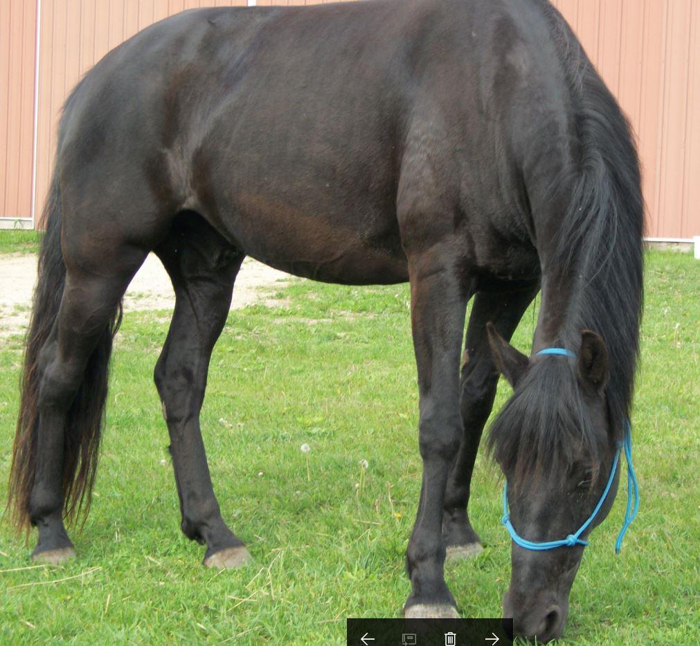 Name: Onyx grazing.JPG, Views: 741, Size: 145.00 KB