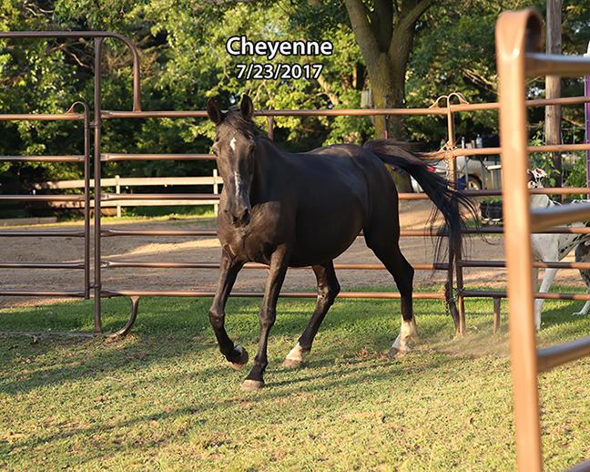 Name: cheyenne-july23-IMGL1213-copy.jpg, Views: 461, Size: 429.72 KB