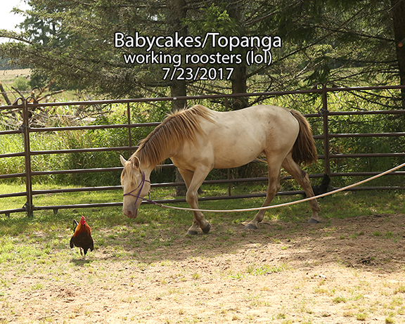 Name: baby-cakes-topanga-rooster-july23-IMGL1142-copy.jpg, Views: 721, Size: 400.14 KB