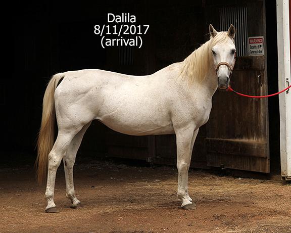 Name: dalila1-august11-IMG_7246-copy.jpg, Views: 938, Size: 243.06 KB
