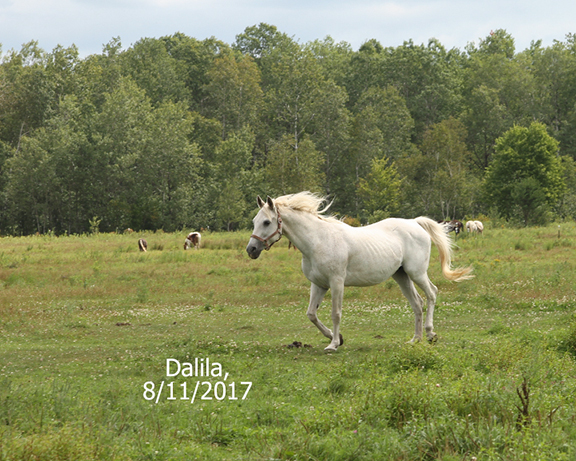 Name: dalila-august11-extra-IMG_7284-copy.jpg, Views: 940, Size: 310.99 KB