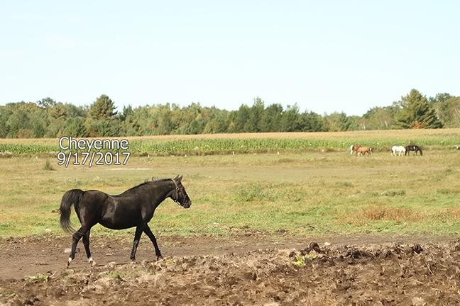 Name: cheyenne1-pasture-sept17-IMG_8773-copy.jpg, Views: 713, Size: 256.33 KB