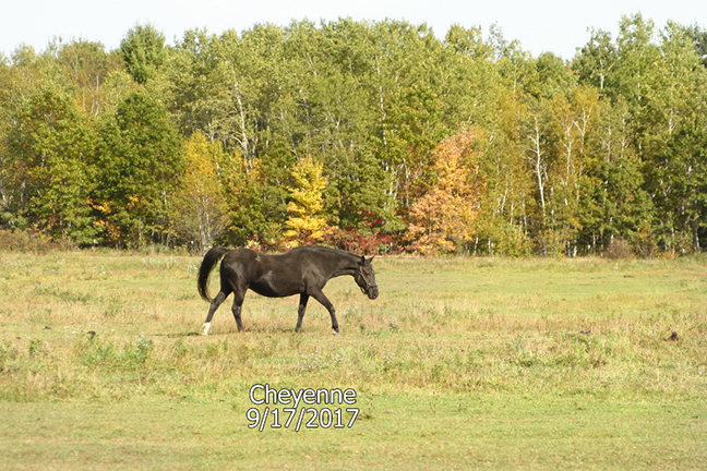 Name: cheyenne3-pasture-sept17-IMG_8811-copy.jpg, Views: 708, Size: 367.61 KB