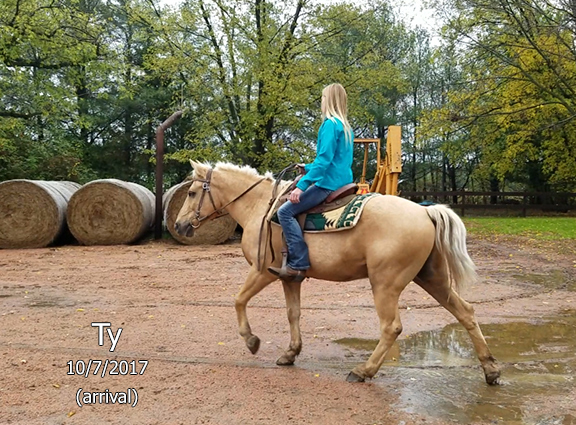 Name: ty-pony1-oct7-forum.jpg, Views: 549, Size: 233.52 KB