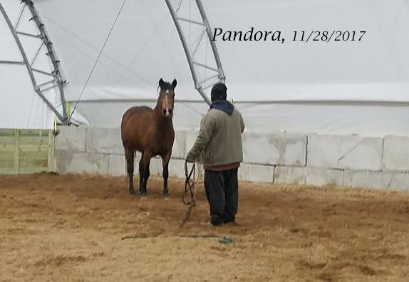 Name: pandora-nov28-20171128_195318_resized.jpg, Views: 869, Size: 138.47 KB
