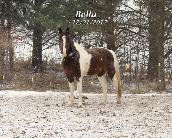 Name: bella-twh-dec21-IMG_1046-copy.jpg, Views: 210, Size: 347.58 KB
