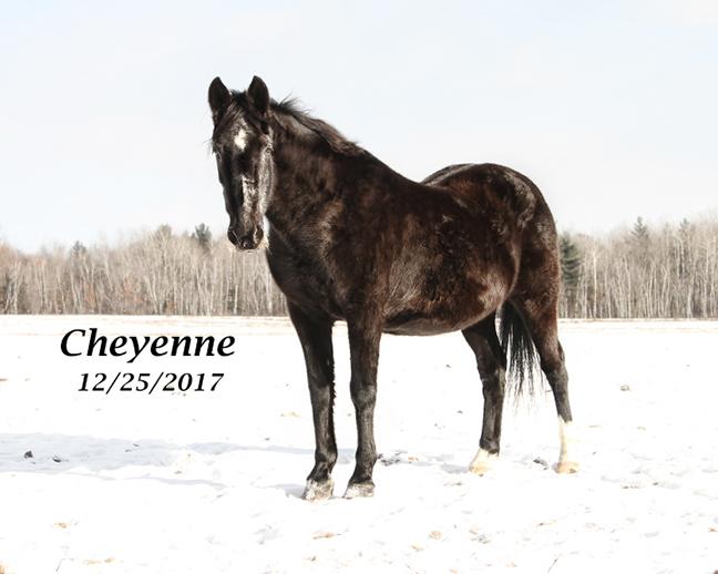 Name: cheyenne-dec25-IMG_1396-copy.jpg, Views: 248, Size: 173.13 KB