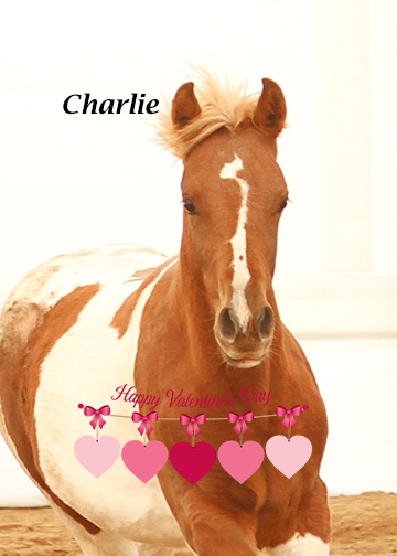 Name: charlie-forum.jpg, Views: 24, Size: 117.95 KB