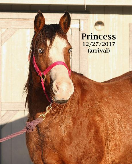 Name: princess3-dec27-IMG_1525-copy.jpg, Views: 26, Size: 281.99 KB