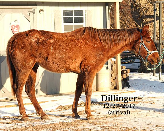 Name: dillinger1-dec27-IMG_1424-copy.jpg, Views: 611, Size: 387.79 KB